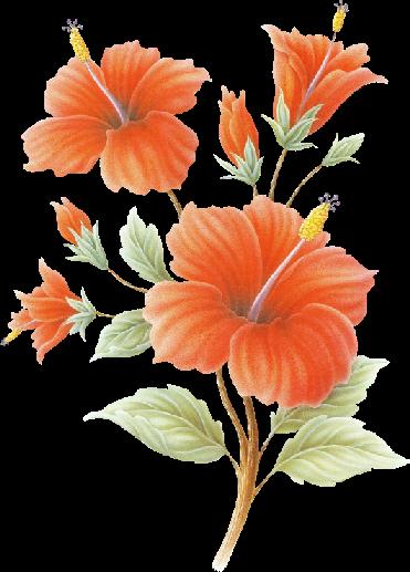 fleurorange05